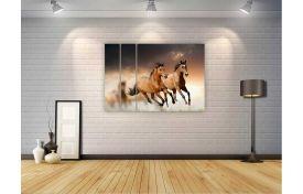 Лошади 15
